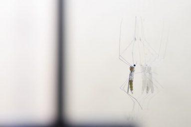El dengue en la Amazonía: La otra epidemia, y lo que nos dice de nuestro sistema de salud